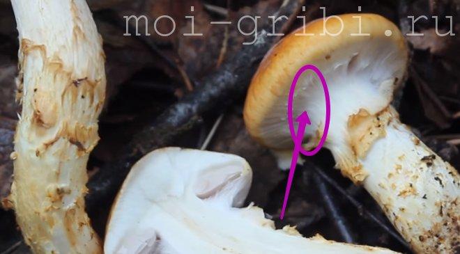 паутинка на грибах