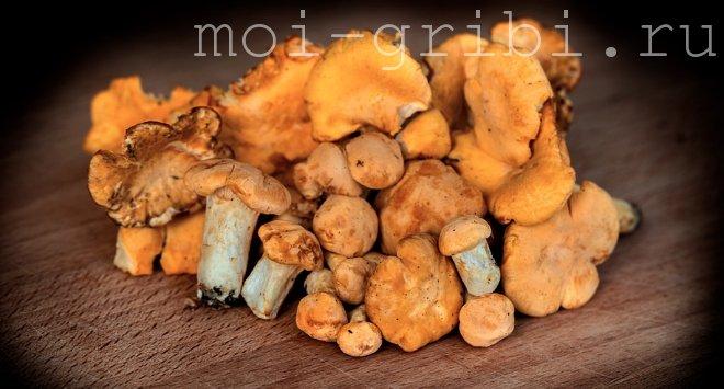 молодые грибочки