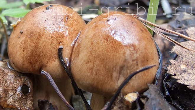 осенние грибочки