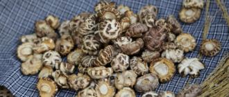 шиитаке грибы