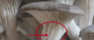 ножки вешенок