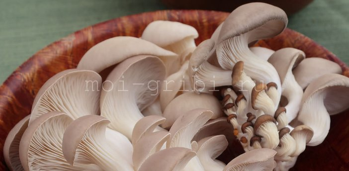 сырые грибочки