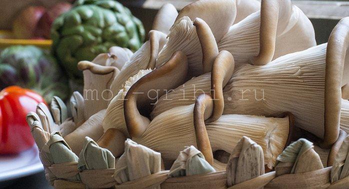 Калорийность грибов вешенки