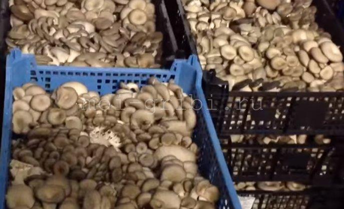 хранение грибов в ящиках