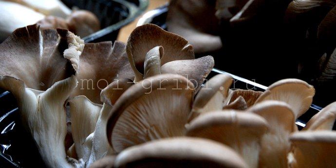 грибы в магазине