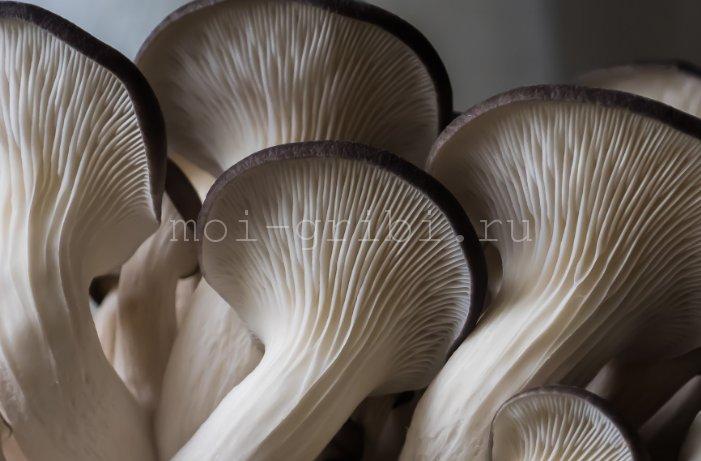 очень красивые грибочки