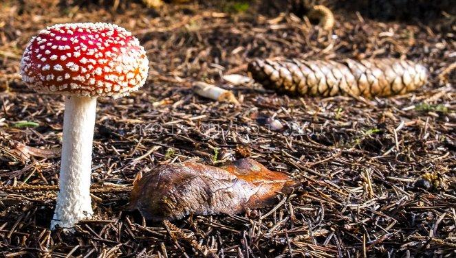 грибы и религия