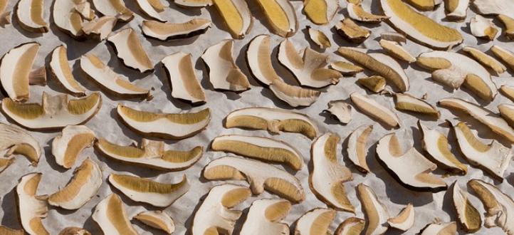 сушить грибы