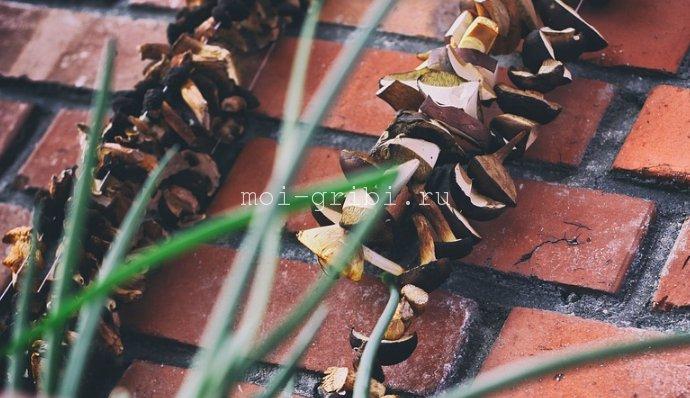 сушеные грибочки