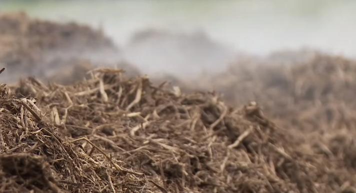 компост для выращивания шампиньонов